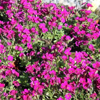 Meylan fleurs