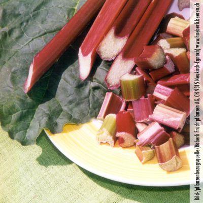rhubarbe rheum rhubarbe 39 frambozen rood 39 rhubarbes p pini res meylan shop. Black Bedroom Furniture Sets. Home Design Ideas